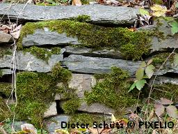 Mauer_Dieter-Schtz